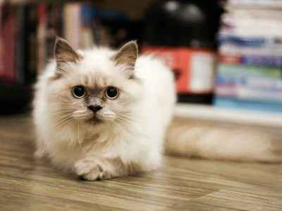 Soco The Cat