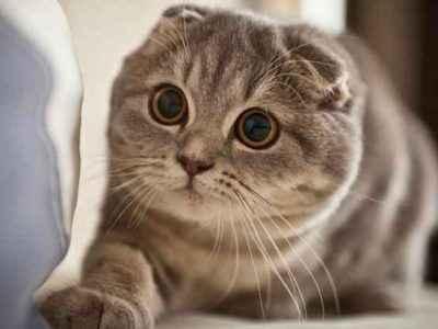 Σκότυ Η Γάτα