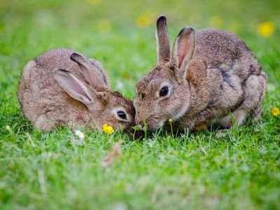 Need Rabbits