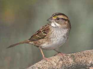 Yuki Sparrow
